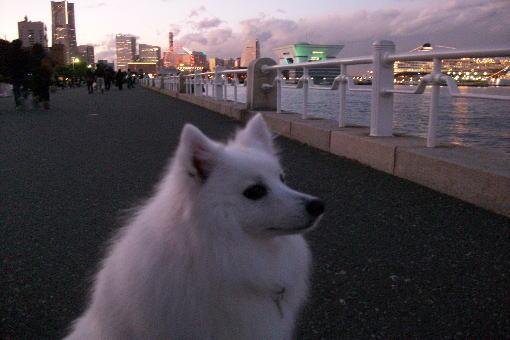 Burogumiruyokohama2